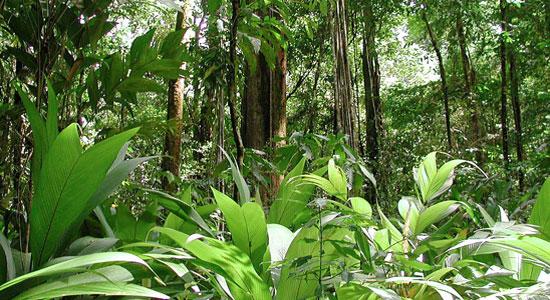 غابات المطر الاستوائية
