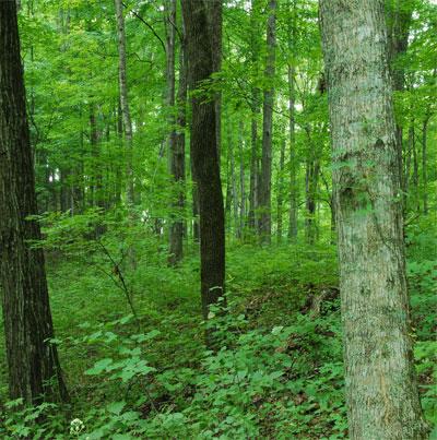 ما أجمل الغابة