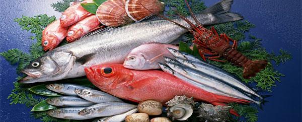 السمك غذاء حيوي للعقل
