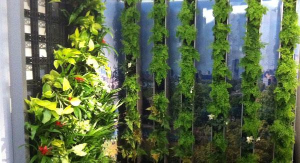 جدران خضراء لمقاومة التلوث