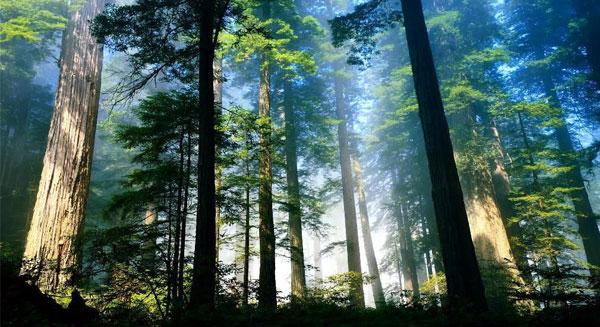 علماء النبات في برلين يكافحون أثر التغير المناخي على الأشجار