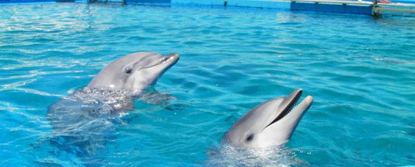 رصد نوع جديد من الدلافين قبالة ساحل استراليا