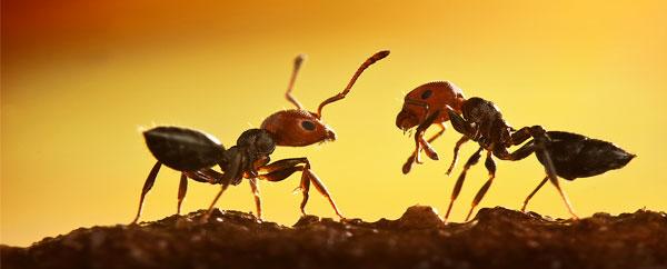 النمل يستقر في أفضل الأماكن للعيش!