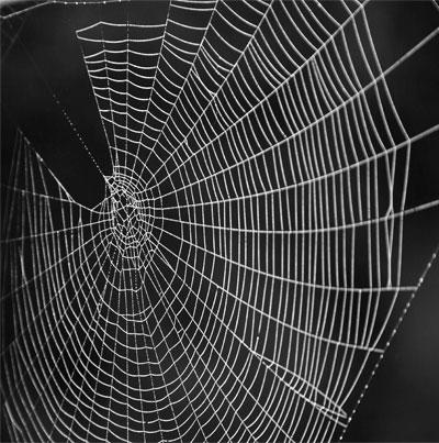 خيوط العنكبوت من صيد الحشرات إلى قياس دقات القلب!