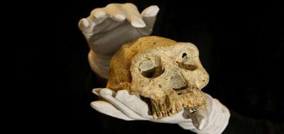 اكتشاف جمجمة عمرها 1.8 مليون سنة