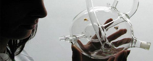 توظيف النحل لتشخيص الأمراض