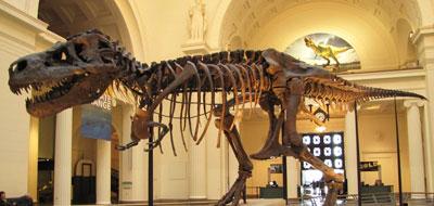 """اكتشاف أسلاف الديناصور """"تي ركس"""""""