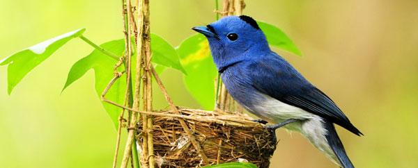 الحيوانات والطيور والحشرات تعالج نفسها بأساليب متنوعة