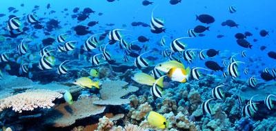رحلة في أعماق البحر
