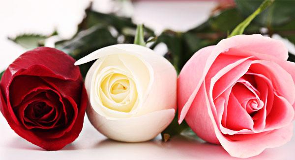 رائحة الورد منشطة للدماغ