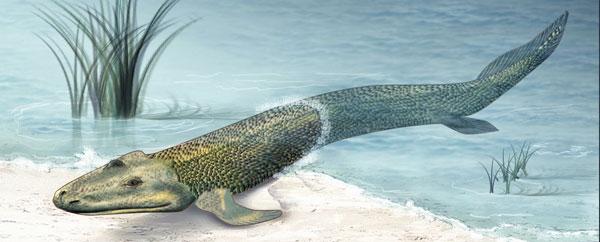 أرجل خلفية في سمكة من ملايين السنين