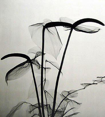 إبداع صور فنية مرئية تحت الأشعة السينية