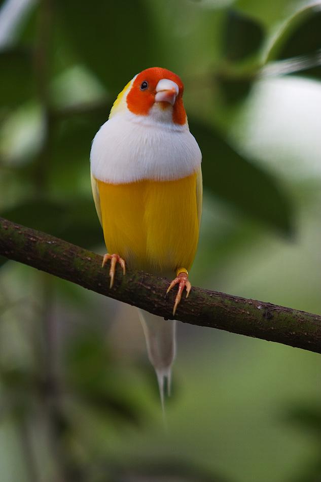 طيور الخيال الأكثر إثارة في العالم