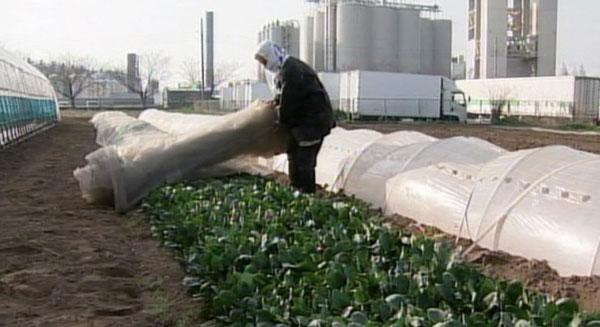 التلوث الإشعاعي للغذاء