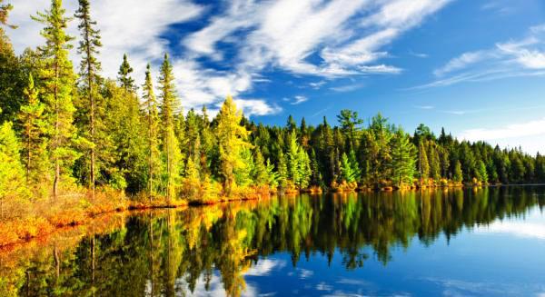 بمناسبة اليوم الدولي للغابات