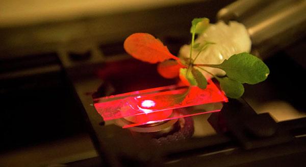 دقائق النانو تساعد في تحسين عملية التركيب الضوئي