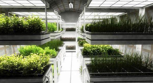 سرعة نمو النباتات على متن مركبات الفضاء؟