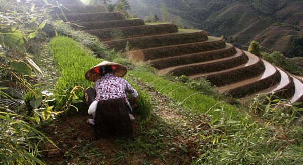 تلوث خمس الأراضي الزراعية في الصين