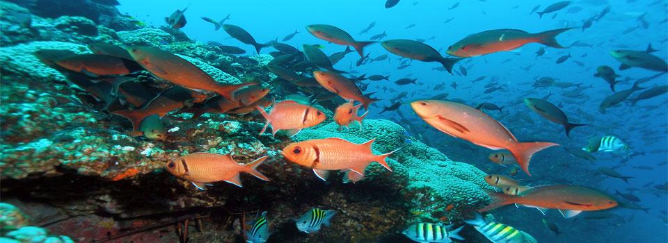 البيئة البحرية