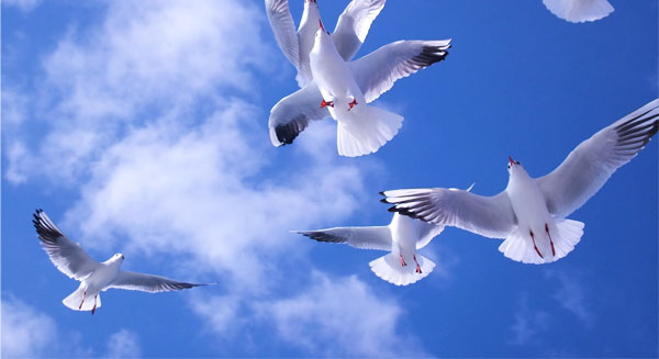 حفظ السلام الدولي