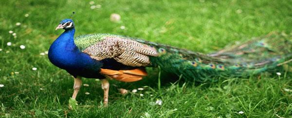اكتشفوا معي أجمل الطيور