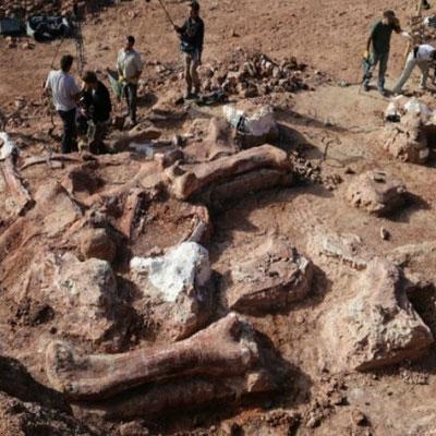 علماء المستحثات يكتشفون أضخم هيكل عظمي لديناصور