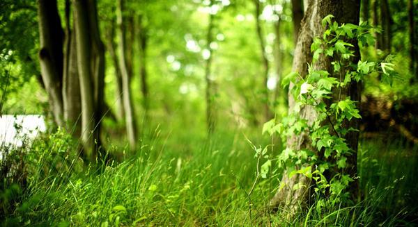 النباتات تمتص ثاني أوكسيد الكربون