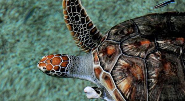 تغير المناخ يفسد بيض السلاحف البحرية