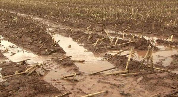 كيفية معالجة تلوث التربة