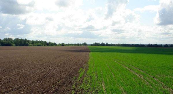معالجة تلوث التربة