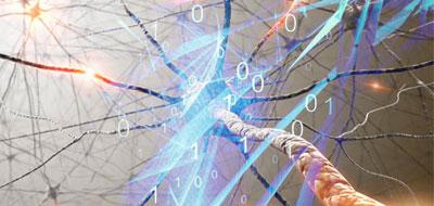 علماء أمريكيون يضعون لغة لبرمجة عمل الخلايا الحية