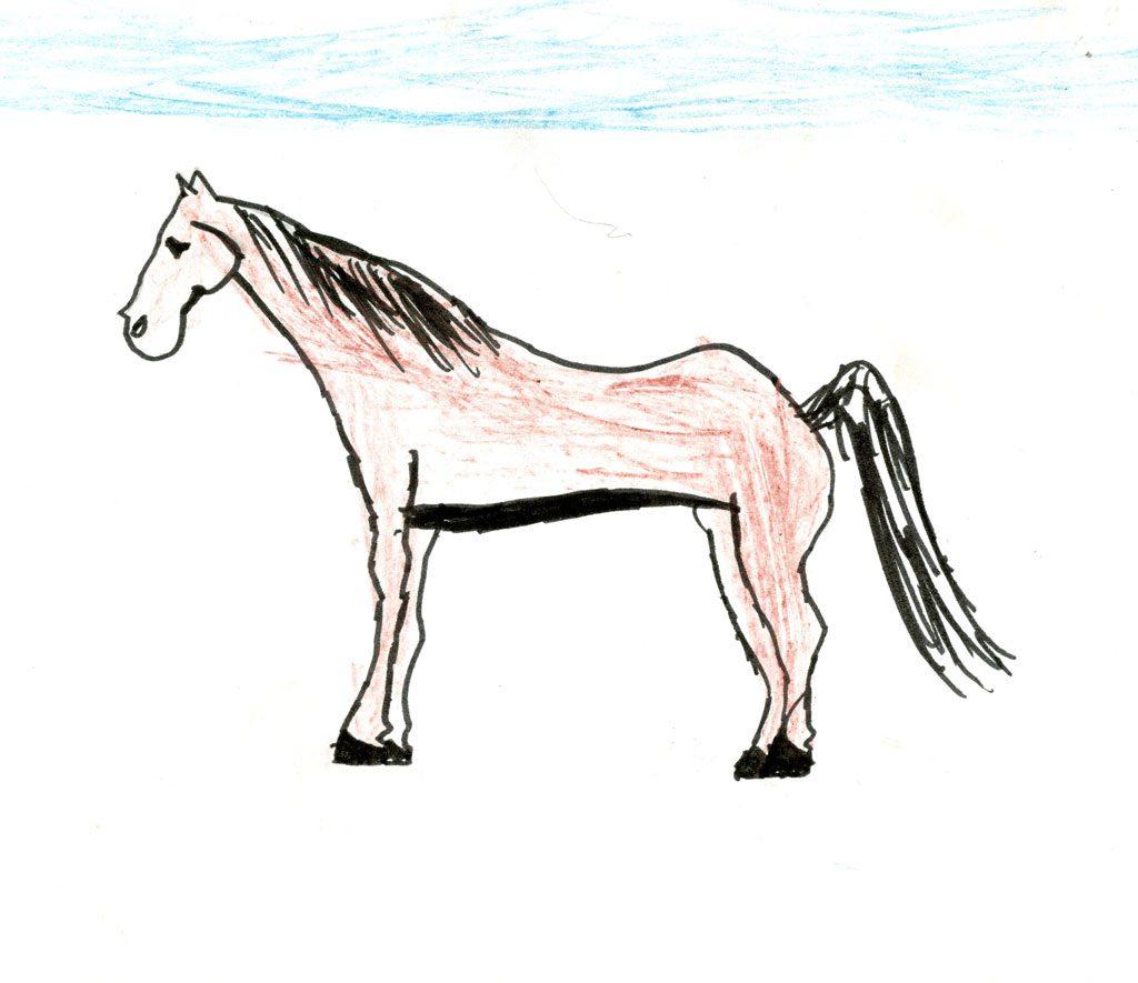 الحصان العربي الأصيل