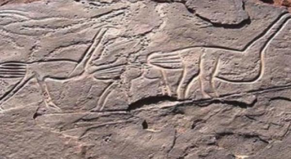 النقوش الصخرية بالمغرب