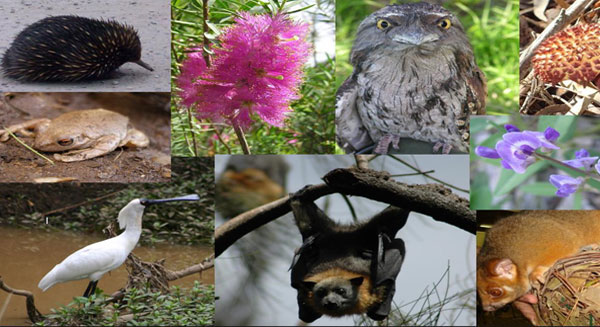 ما هو دور التنوع البيولوجي؟
