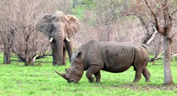 أفريقيا تفقد 10 مليارات دولار سنوياً بسبب تجارة الحيوانات البرية