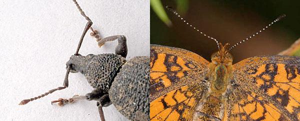معرض للحشرات بحديقة الحيوانات الوطنية بالرباط