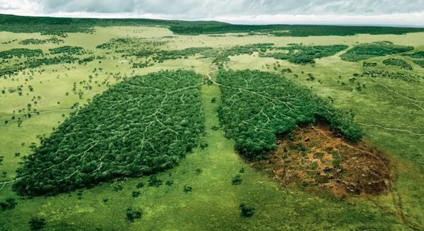 المشاكل البيئية المعاصرة