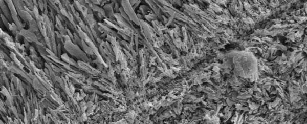 حفريات ميكروبية قديمة تُؤكّد تكوين المعادن قبل 809 مليون سنة