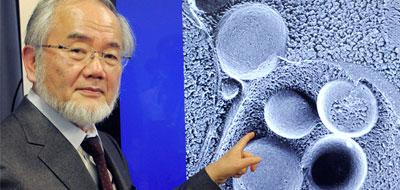 عالم ياباني يمنح جائزة نوبل في مجال الطب